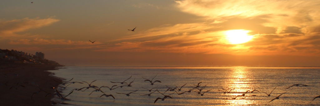 Las Conchas Rocky Point Mexico Seagulls flying at sunrise in Rocky Point Mexico