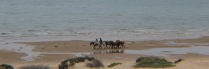 Horses for Horseback riding rentals in Rocky Point Mexico (Puerto Penasco).