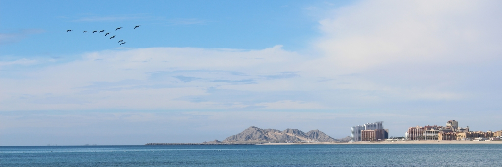 Pelicans flying in formation over Rocky Point Mexico (Puerto Penasco).