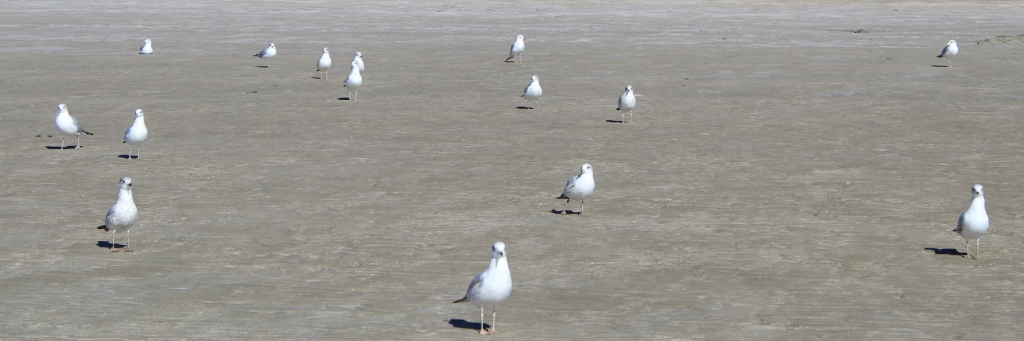 Sandy Beach Seagull Club in Rocky Point Mexico (Puerto Penasco).