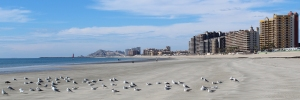 "Seagulls on ""Sandy Beach"" in Rocky Point Mexico (Puerto Penasco)."