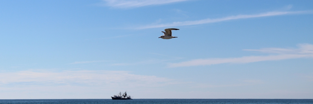 Seagull over a fishing boat in Rocky Point Mexico (Puerto Penasco).